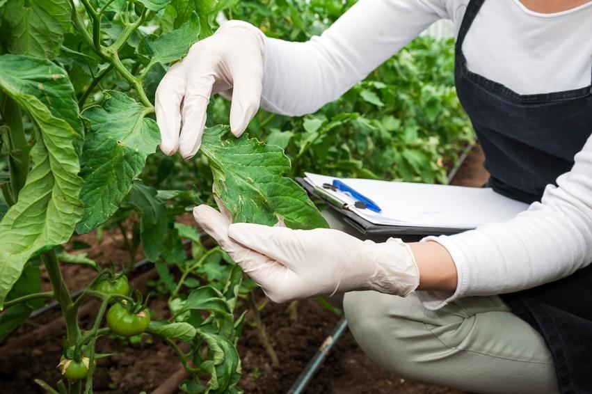 L'utilisation de gants pour l'agriculture